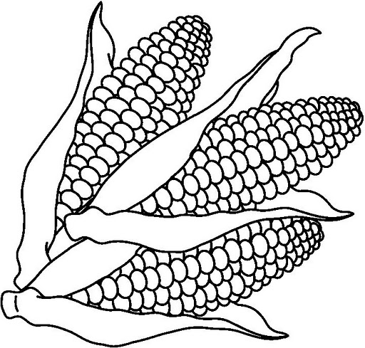 preschool thanksgiving coloring pages corn - photo#15