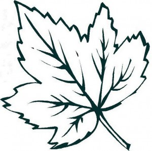 leaf coloring page for kid