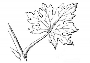 leaf_teach_to_coloring_pages