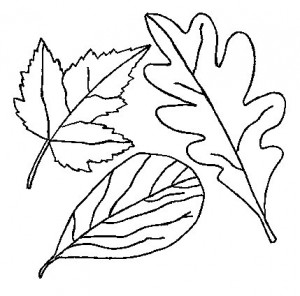 leaves coloring
