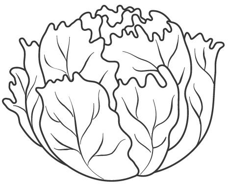 Lettuce Crafts For Kids