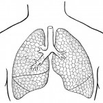 lungs coloring