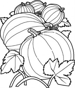 pumpkin coloring