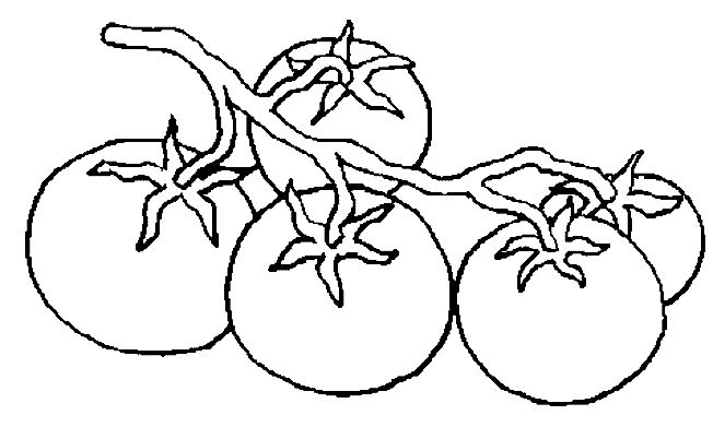 coloring pages tomatoes - photo#33
