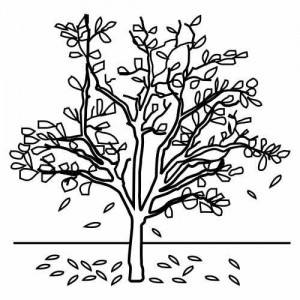 treeandleaves_coloring_page