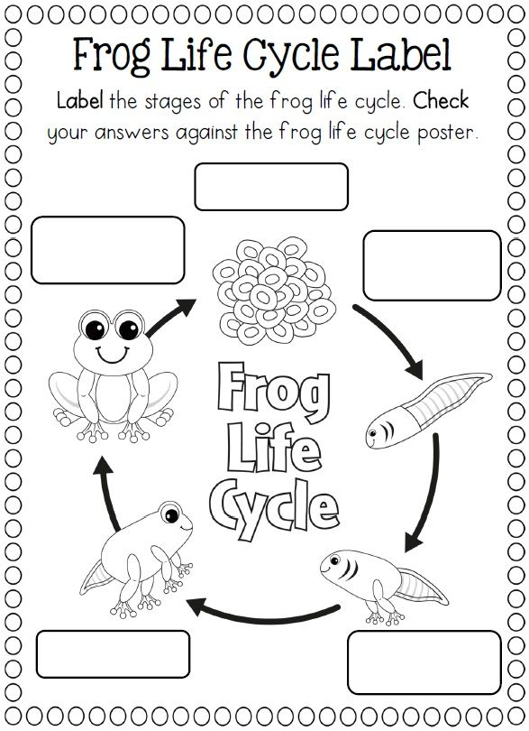Craftsactvities and worksheets for preschooltoddler and kindergarten life cycle of a frog coloring page ibookread