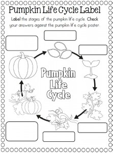 Worksheets Life Cycle Of A Pumpkin Worksheet life cycle craft and coloring page crafts worksheets for of a pumpkin