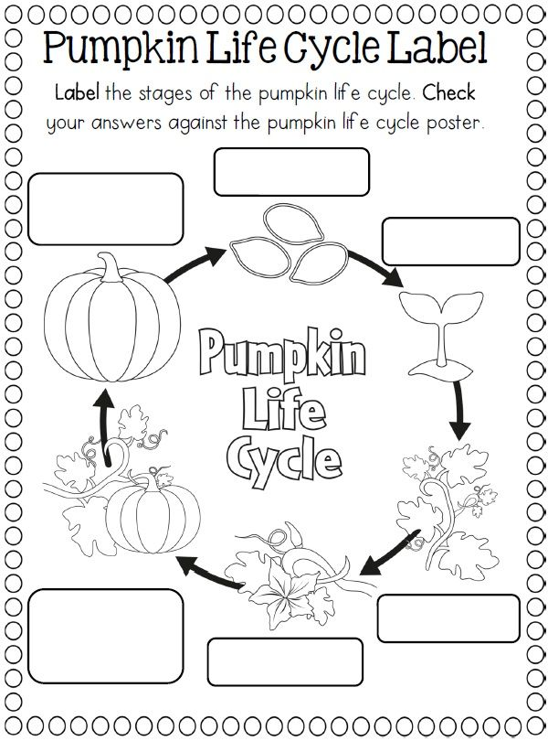 photograph about Pumpkin Life Cycle Printable identify Lifestyle Cycle of a pumpkin Crafts and Worksheets for