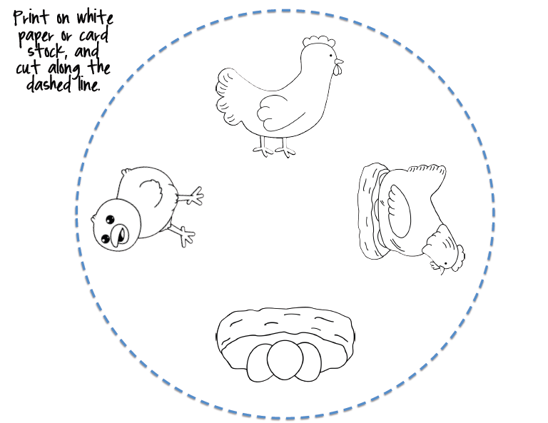 CraftsActvities and Worksheets for PreschoolToddler and Kindergarten – Chicken Life Cycle Worksheet