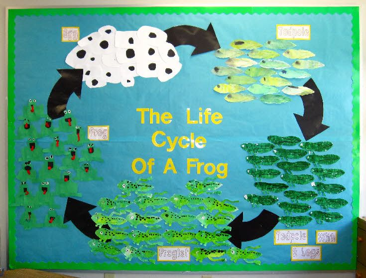 free Life Cycle of a frog craft