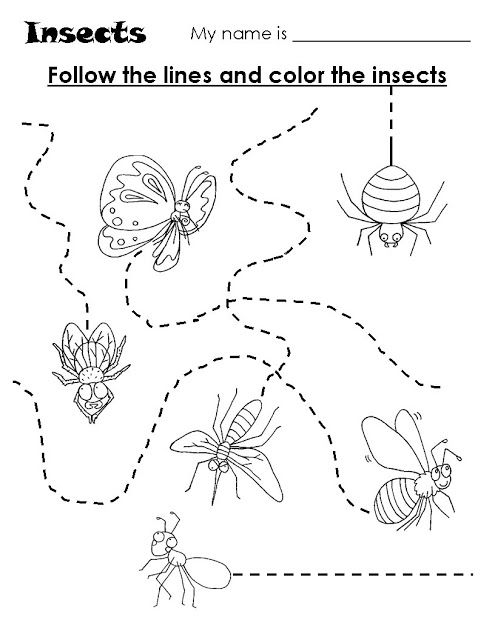 insects trace worksheet | Crafts and Worksheets for ...