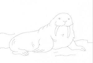 walrus trace