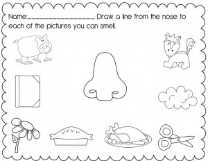 Five senses worksheet for kids | Crafts and Worksheets for Preschool ...