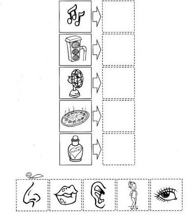 math worksheet : five senses worksheet for kids  crafts and worksheets for  : 5 Senses Worksheets Kindergarten