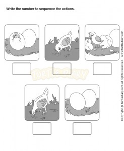 life cycle chick worksheet