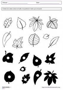 leaf shadow worksheet