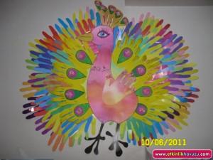 peacock bulletin board