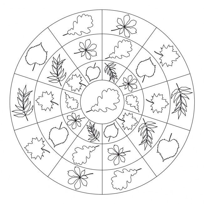 autumn mandala coloring page (8)