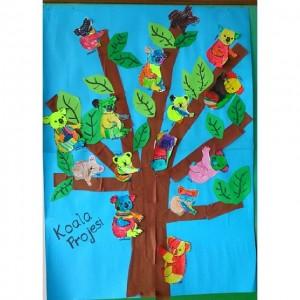 koala bulletin board