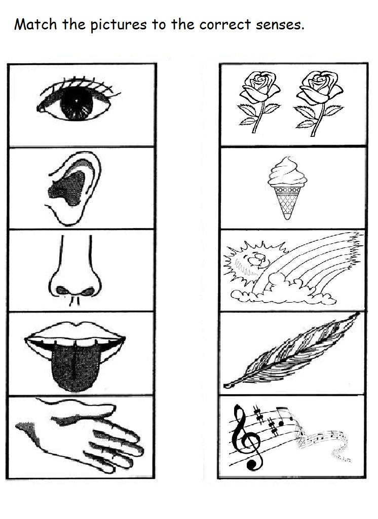 Free 5 senses worksheet for kids – 5 Senses Worksheet