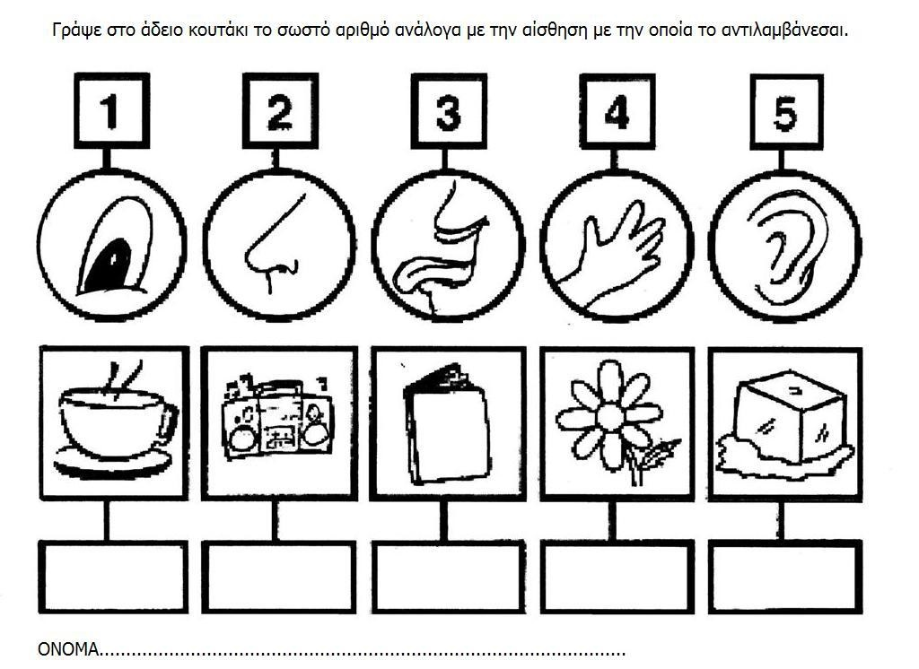 5 senses worksheet for kids (12)