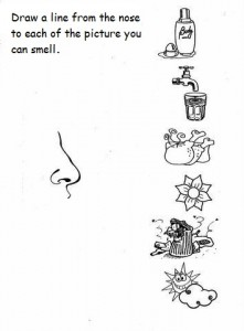 5 senses worksheet for kids (6)