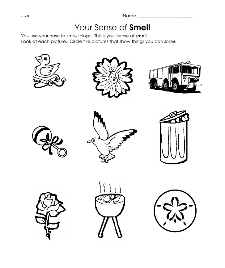 smell worksheet