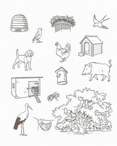 free animal habitat worksheet for kids (2)