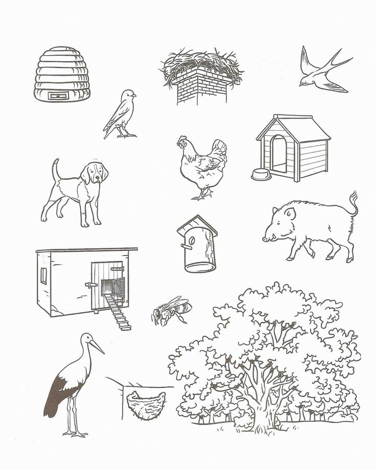 Animal Habitat Worksheets For Kindergarten - Pichaglobal