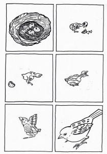 lfe cycle bird coloring pages