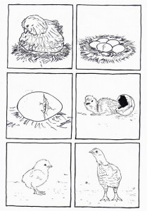 life cycle bird coloring page