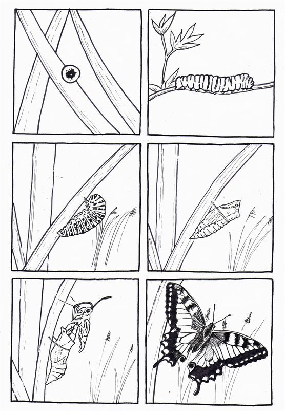 life cycle butterfly coloring pages for kids