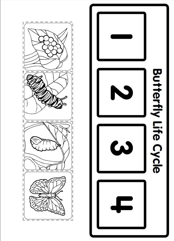 life cycle butterfly worksheet for kids (1)