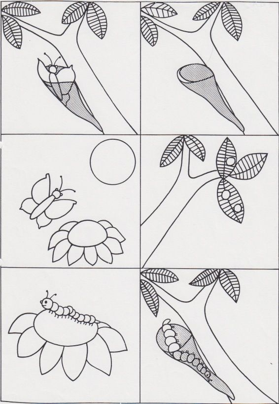 life cycle butterfly worksheet for kids (3)