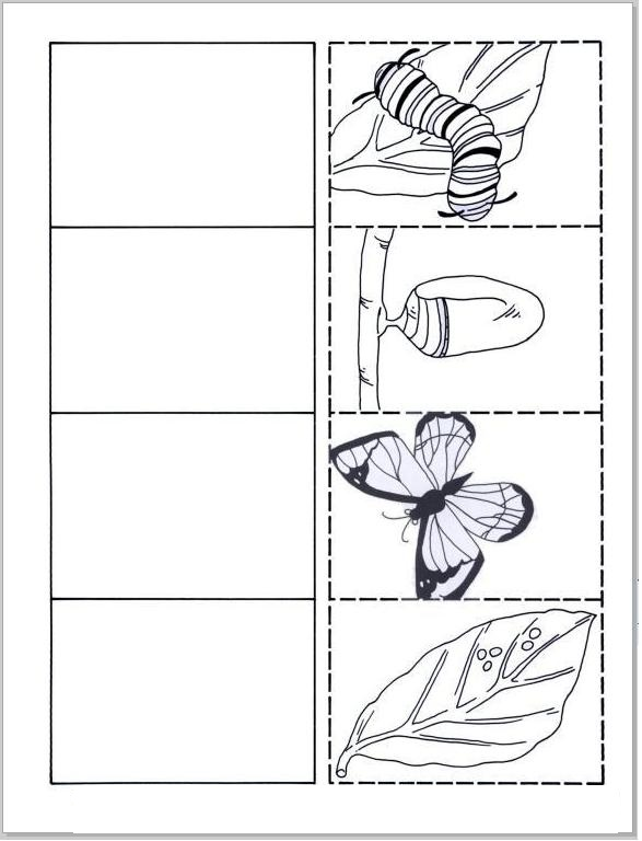 life cycle butterfly worksheet
