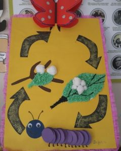 life of cycle butterfly craft idea for kids