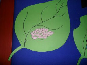 life of cycle butterfly craft idea for kids (3)