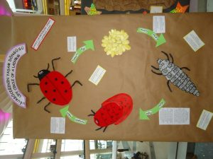 life of cycle ladybug craft