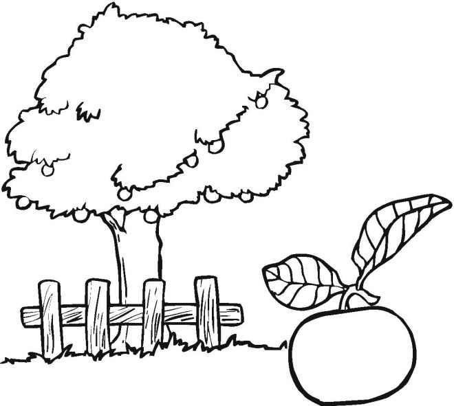 apple-tree-coloring-pages