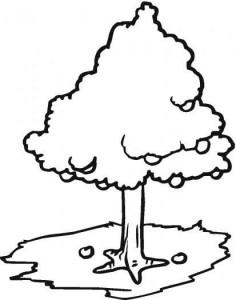 apple-tree_coloring-1