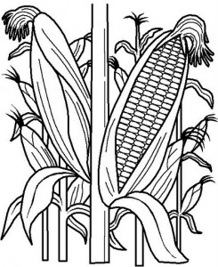 corn coloring