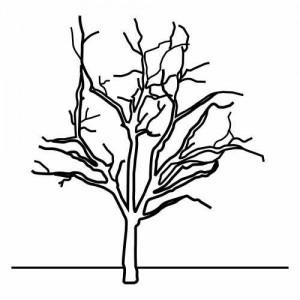 dark_tree_coloring_page