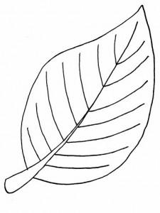 free_leaf_coloring