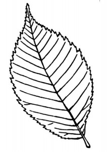 leaf_coloring_and_printing