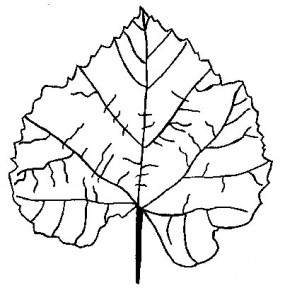 leaf_coloring_page