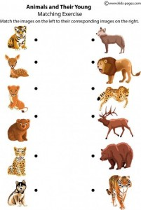 Animals and Their Young worksheets