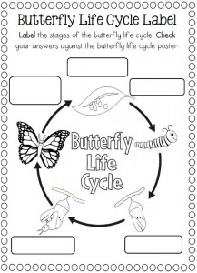 Life Cycle of a butterfly coloring page