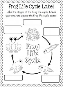 Life Cycle of a frog coloring page