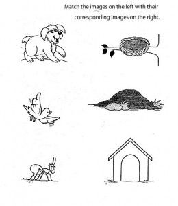 Matching animals to their home worksheet (9)