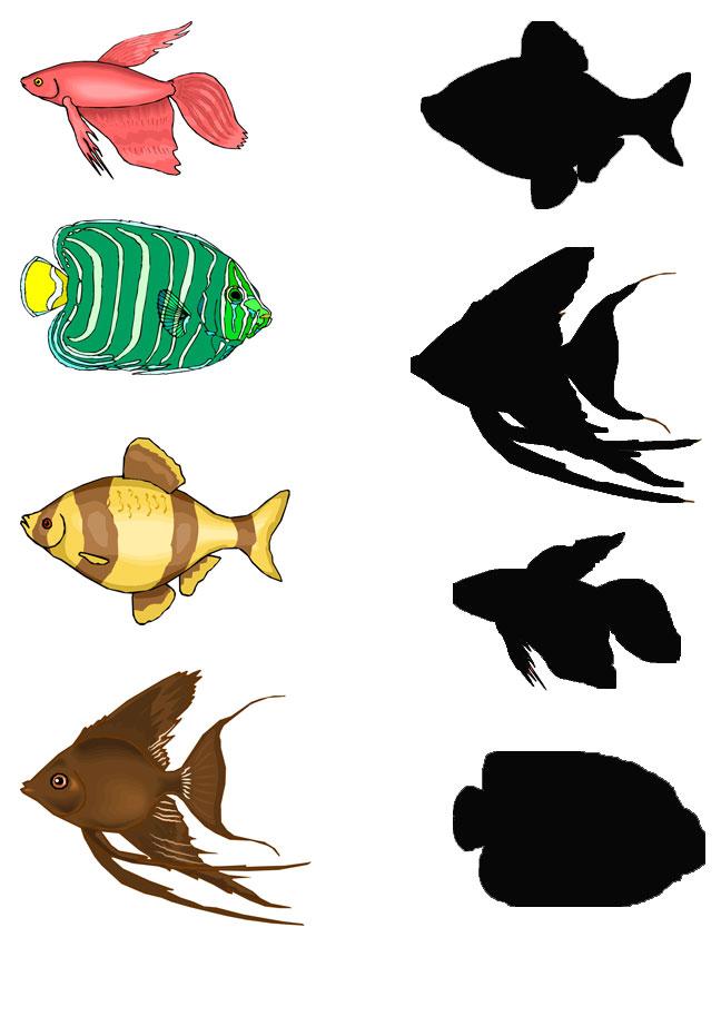 fish shadow worksheet
